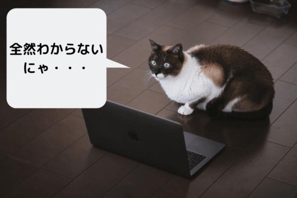 何を勉強したらいいのか分からない猫